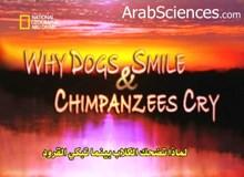 لماذا تضحك الكلاب بينما تبكي القرود