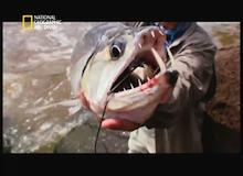 صنارة الصيد : السمك مصاص الدماء