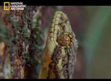 أفتك حيوانات العالم : الأمازون