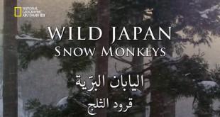وجهات برية - اليابان البرية : قرود الثلج