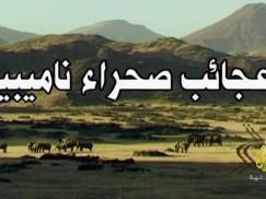 عجائب صحراء ناميبيا