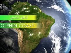 وجهات برية HD : البرازيل البرية – ساحل الدلفين