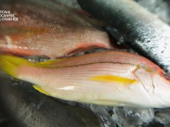 ملفات الغذاء HD : السمك