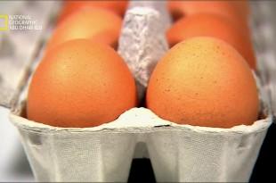 ملفات الغذاء HD : البيض