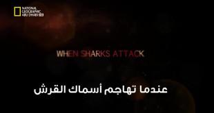 خاص القروش HD : عندما تهاجم أسماك القرش - سفاح كاليفورنيا