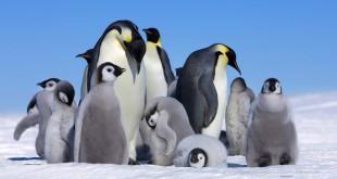 مقال - كيف يعيش البطريق الإمبراطوري في القطب المتجمّد؟