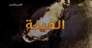 الأكبر و الأشرس HD الموسم 1 – حلقة 2 الفيلة