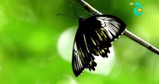 جولة - منتزه الفراشات حديقة تمان - إندونيسيا