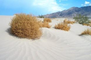 مقتطف – ظاهرة طبيعية مذهلة  لنبات تامبل وييد