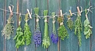 مقال – أعشاب طبيعية ورغم مرارتها.. تعالج أمراضا كثيرة