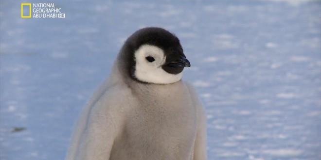 وجهات برية HD : الحياة البرية في القطب الجنوبي