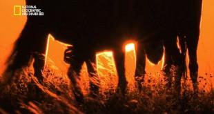وجهات برية HD : السافانا الإفريقية