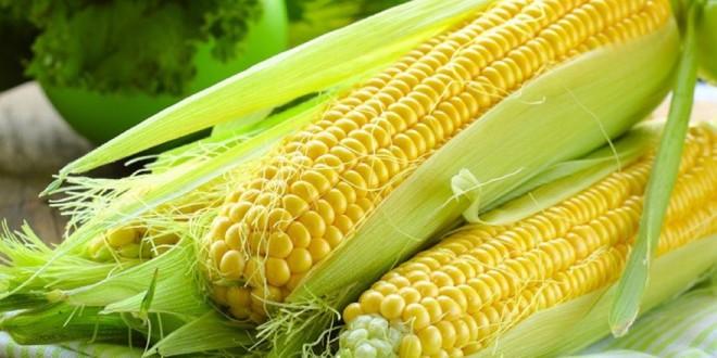 مقال - الذرة وفوائدها العجيبة على صحة الإنسان