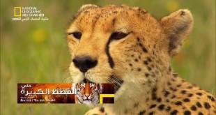 خاص : القطط الكبيرة - قطط الصدارة HD