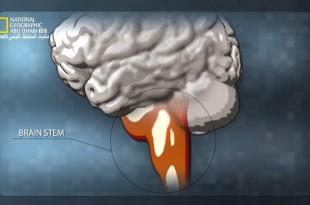 ألعاب العقل HD : تعرفوا على العقل