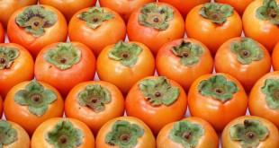 مقال - الكاكي..فاكهة لذيذة وفوائدها الصحية كثيرة