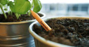 """مقتطف - """"أقلام رصاص""""يمكنك زرعها،سقيها ومشاهدة نموّها!"""